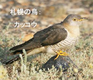 Bird_cuckoo_5