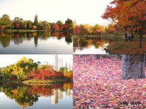 Red_leafs_nakajima_park