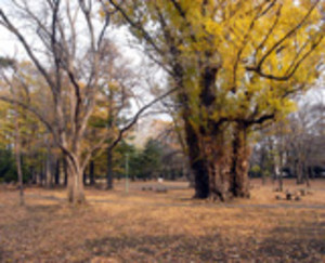 Maruyamapark